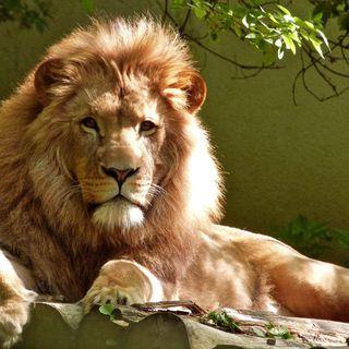 Puntata 14: La buzzword è #leone