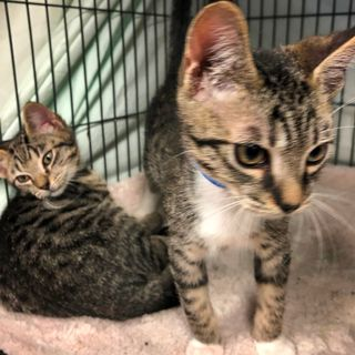 Florida Shelter Ships Stray Cats to New Hampshire
