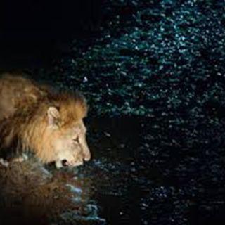 EL leon temeroso