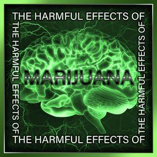 The Harmful Effects of Marijuana