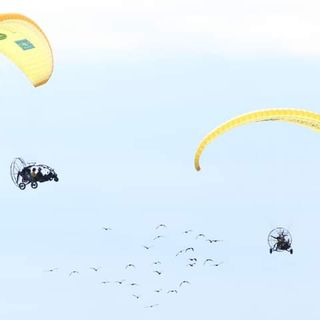 """Lo stormo di ibis fa tappa all'aeroporto """"Ferrarin"""". Migrazione in corso per 28 esemplari"""