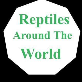 Reptiles around the world