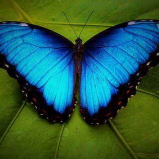 Julia Alvarez - Il tempo delle farfalle