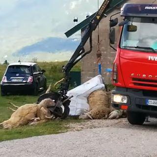 50 pecore cadono in un dirupo e muoiono in Pasubio