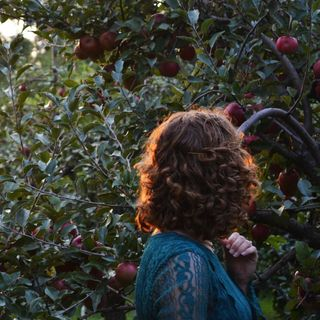 The Bigfoot And The Apple Orchard...