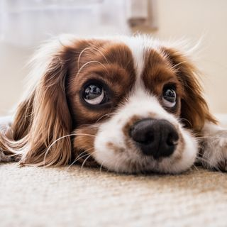 How does having a dog benefit you?