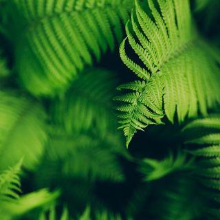 Episódio 03 - Reino Plantae/ Plantas - Pteridófitas.