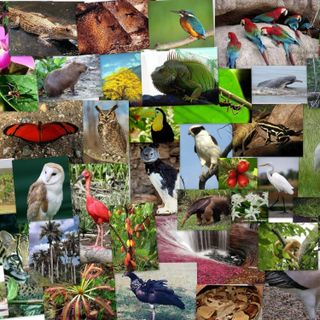 Episode 1: Flora y Fauna de Colombia