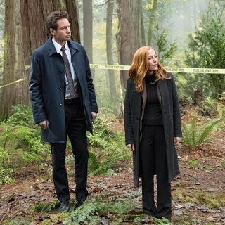 232. SEASON 11 23: Mulder & Scully VI (Kitten)