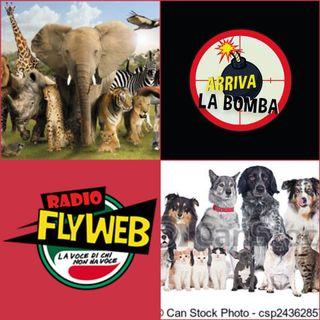 Arriva la Bomba 6.0 Speciale Animali