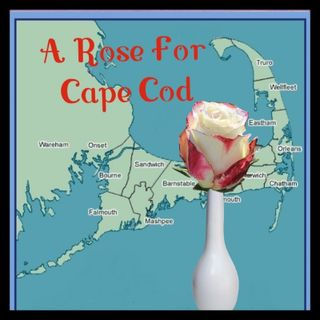 A Rose For Cape Cod (full file)