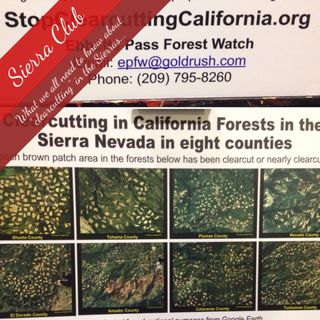 Sierra Club Board Give us the Scoop on Destructive Forest Management