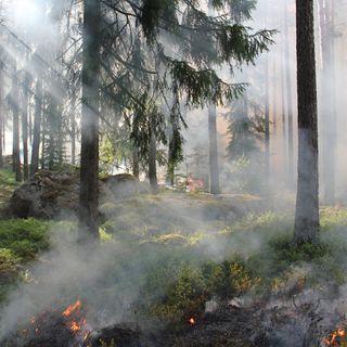 Brucia gli arbusti appena tagliati in zona a rischio. Multato con 2 mila euro due mesi dopo