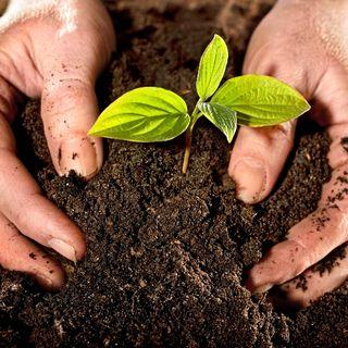 NUESTRO OXÍGENO Importancia de la conservación del suelo