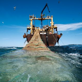 Ocean Grabbing: Una strage silenziosa