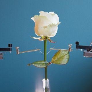 #sca Una rosa caricabatteria