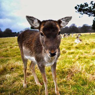 Damien Hannigan, Irish Deer Commission on deer in Waterford