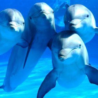 Los delfines de Danilo Medina, en una mar de opciones