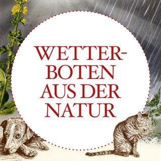 Wetterboten aus der Natur - #1