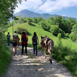 Anello delle Piccole Dolomiti, la scoperta si fa a cavallo, con gli asini e in bicicletta