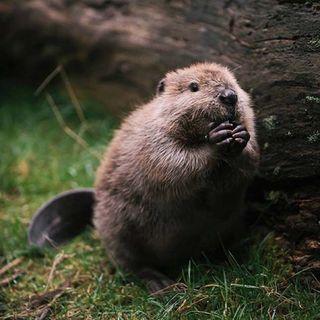 Buongiorno in connessione al castoro! ✨