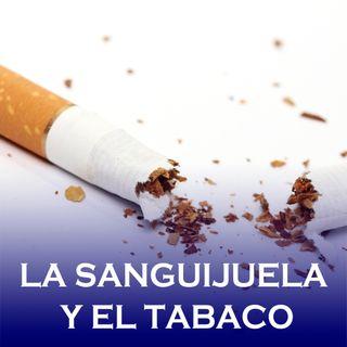 La sanguijuela y el tabaco