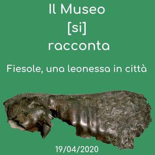 Il Museo (si) racconta: Fiesole, una leonessa in città - Musei di Fiesole
