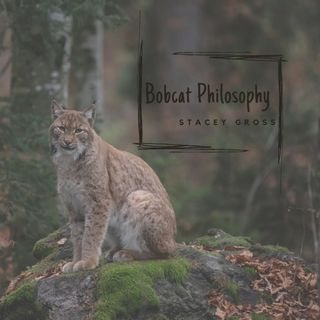 Bobcat Philosophy