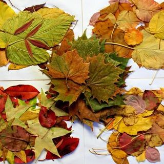 Gathered Leaves