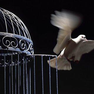 ¿Qué es la libertad? (1 de 2) #sersiendo