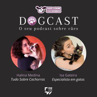 #13 - Como trazer um gato para a casa já tendo um cachorro