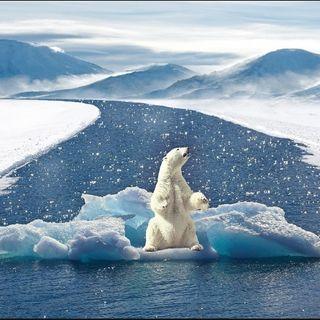 Por qué TODOS deberíamos ser ecologistas y cómo empezar a serlo...