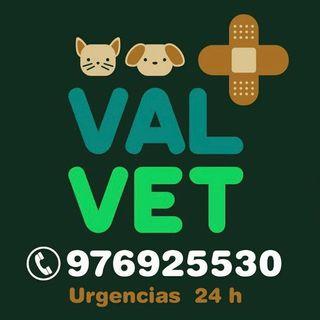 2de3 Anabel Tejedor Veterinaria ValVet