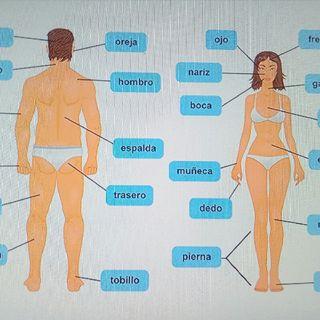 Conexión De Equilibrio Partes Del Cuerpo