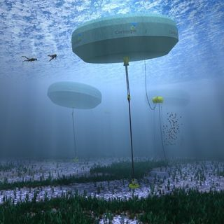 Youth Radio - Carnegie Wave Energy