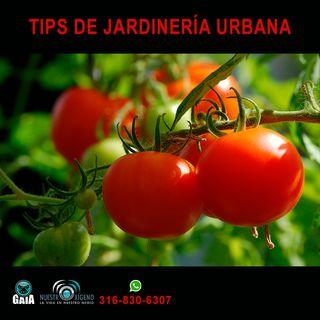 NUESTRO OXÍGENO Tips de jardinería urbana - Ing. Freddy Adalberto Martínez