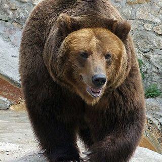 Bears, Ceremony, land, New Stories