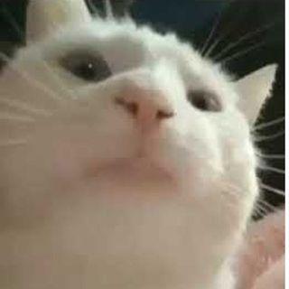 Cat Vibing To Ievan Polkka