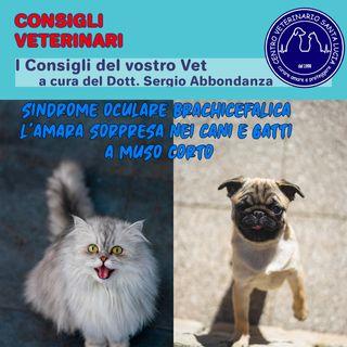 Sindrome oculare brachicefalica l'amara sorpresa nei cani e gatti a muso corto