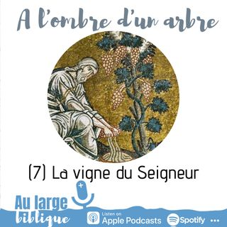 #178 A l'ombre d'un arbre (7) La vigne du Seigneur