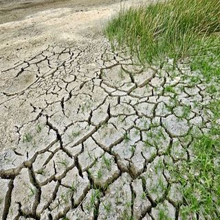Bacteria contra el cambio climático