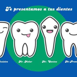Tema 2: Los dientes