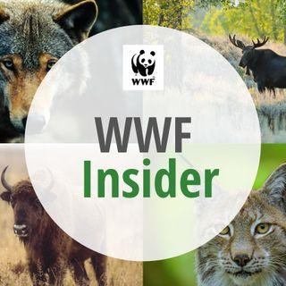 WWF Insider - Leben mit dem Wolf in Deutschland