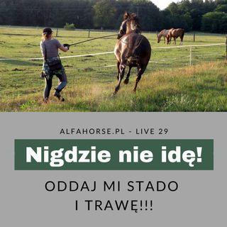 Live 29: Nigdzie nie idę! Chcę do stada i trawy!