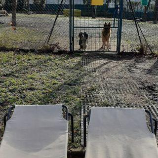 Lettini dei bimbi degli asili riconvertiti in cucce per animali. Donati al canile sanitario
