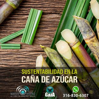 NUESTRO OXÍGENO Sustentabilidad en la caña de azúcar