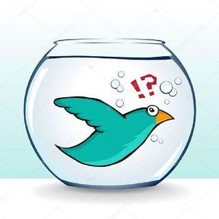 Pássaro No Aquário E Peixe Na Gaiola