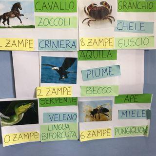Gli animali: caratteristiche,  classe II D