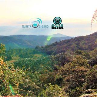 NUESTRO OXÍGENO 14 de agosto Día interamericano de la calidad del aire