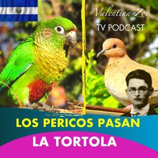 LOS PERICOS PASAN ALFREDO ESPINO🦜🌤️ | La Tortola Alfredo Espino🕊️🌄 | Poemas del Poeta Alfredo Espino